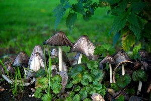 managing mushrooms and weeds