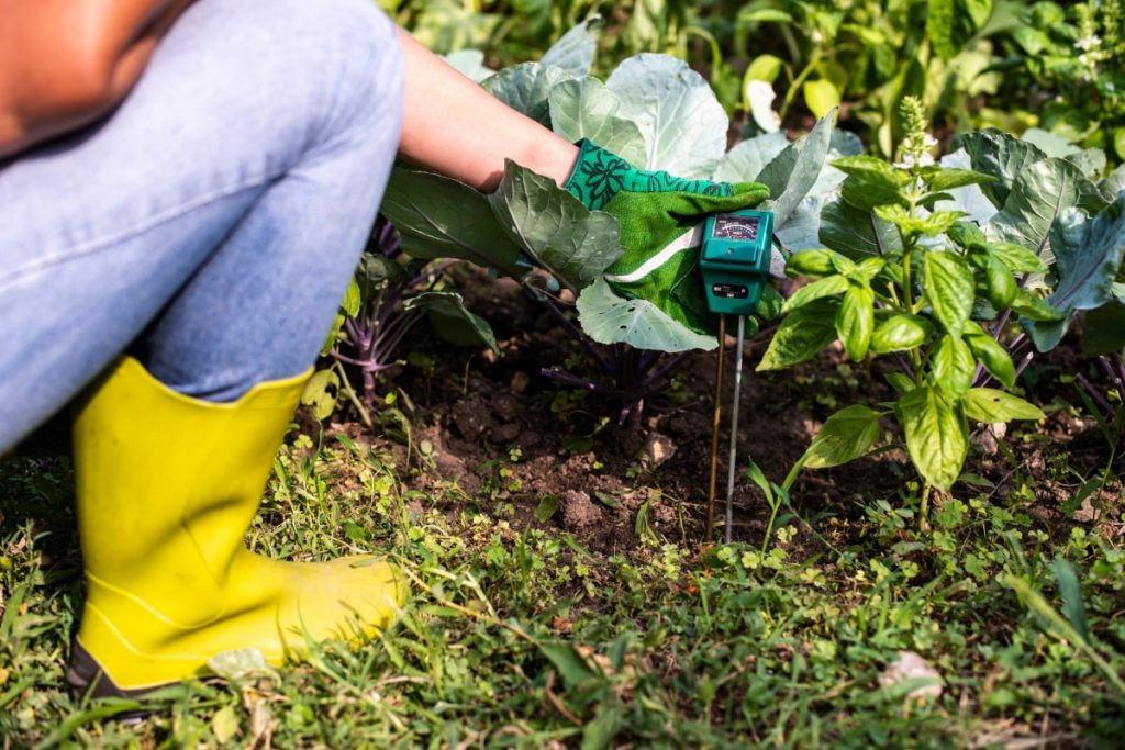 all about the ph levels of your soil