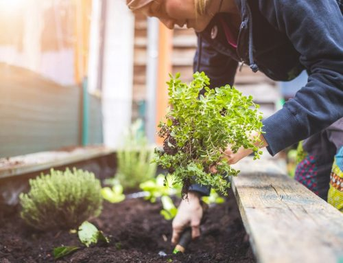 Raised Flower Beds – The Benefits and How to Build Your Own