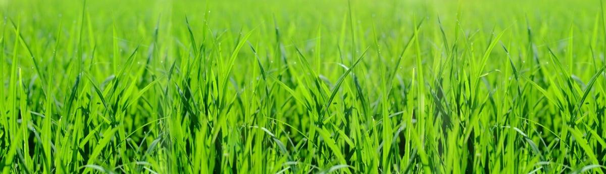 best lawn care lees summit