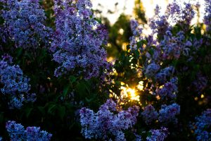 best trees for midwest landscaping by Summit Turf Services