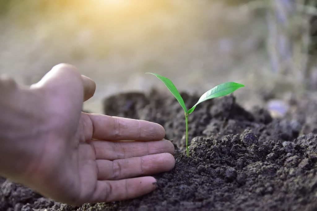 cultivating the soil is key to gardening