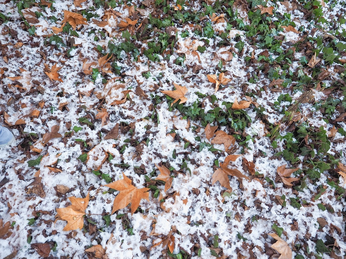 prevention and treatment of snow mold on grass