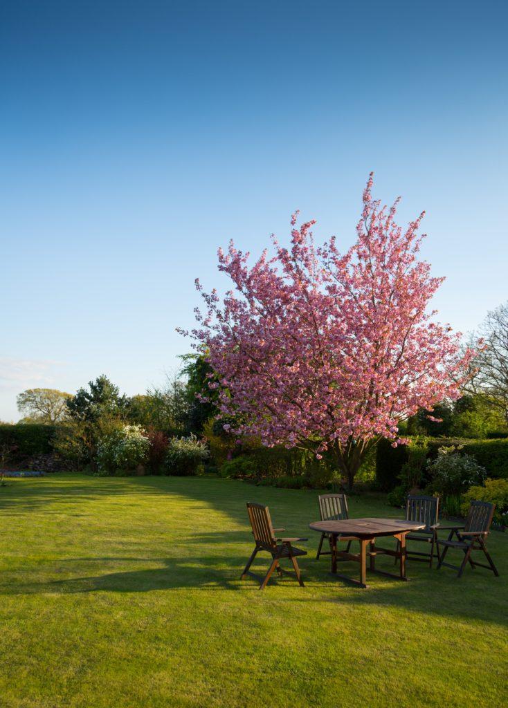 organic lawn care advantages