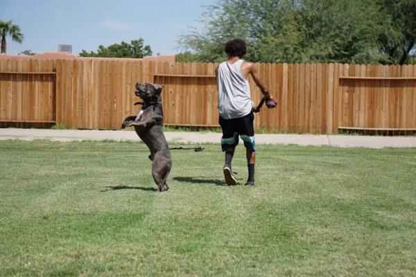 pet friendly back yard
