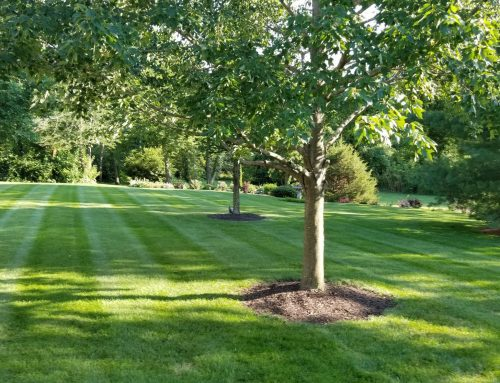 Pros and Cons of Organic Lawn Care