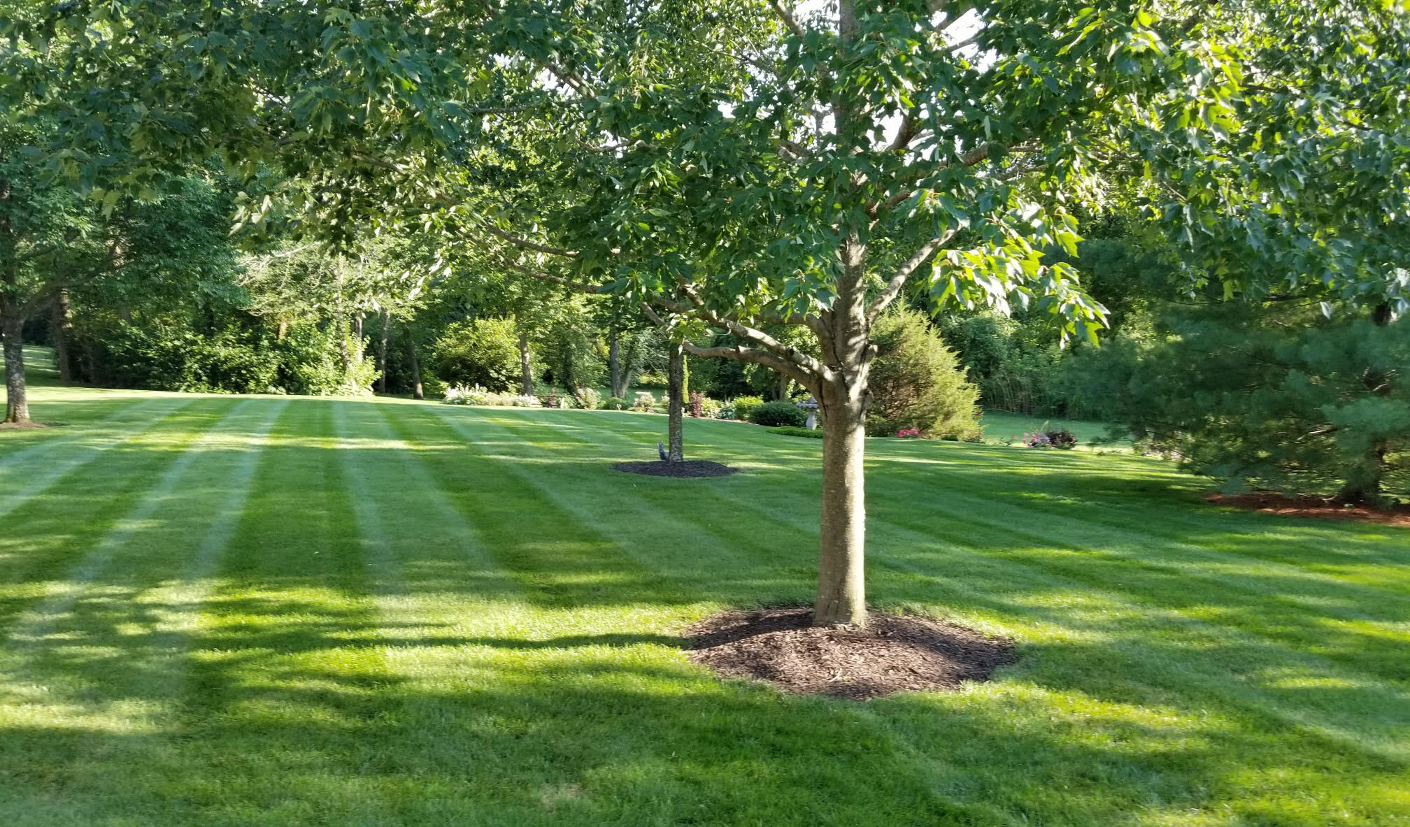 Organic Lawn Care - The Advantages and Disadvantages