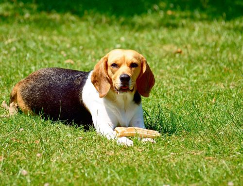 Pet-Friendly Lawn Care Tips