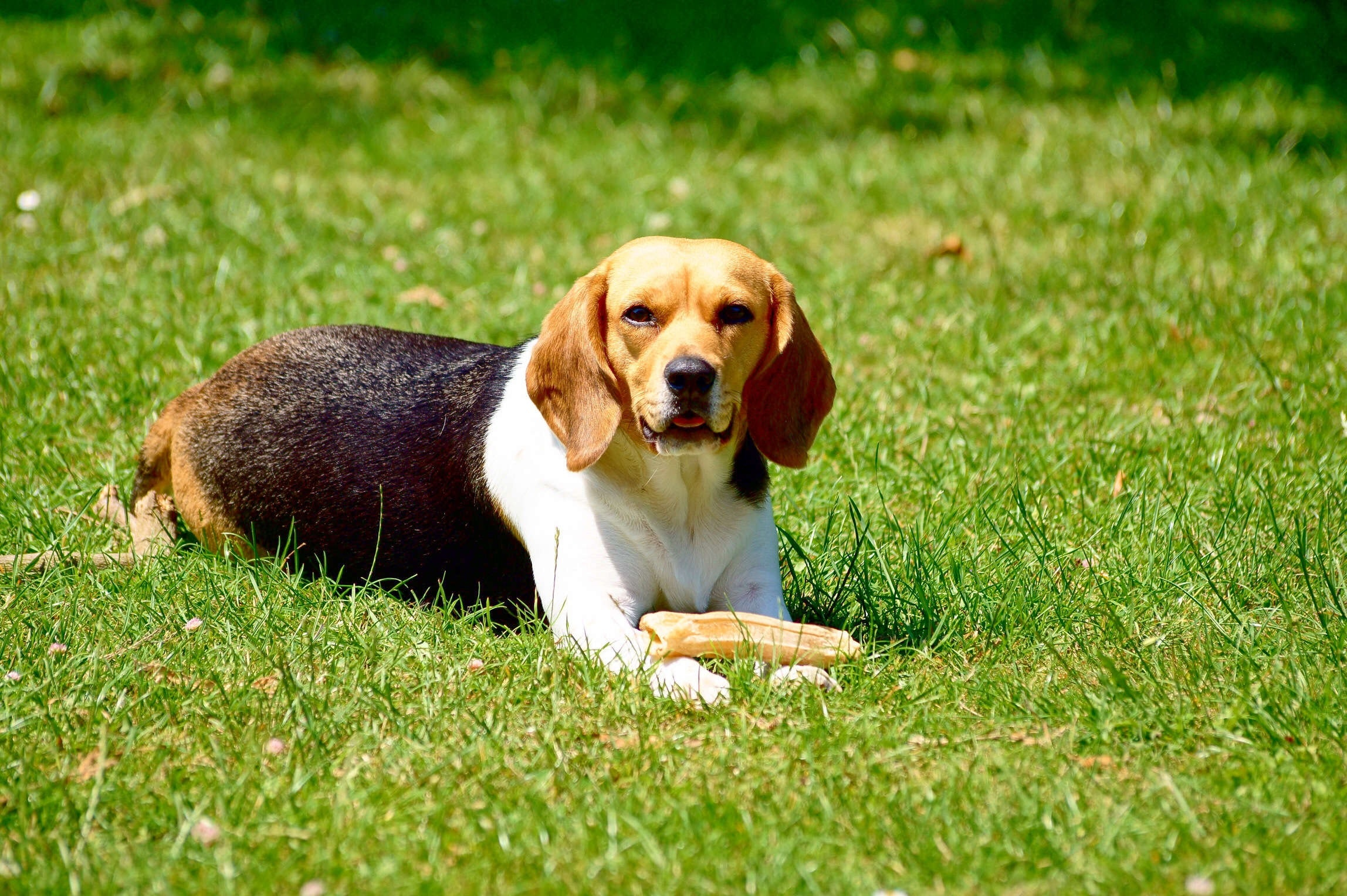 pet proofing your lawn