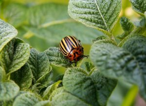 Lawn bugs and how to get rid of them