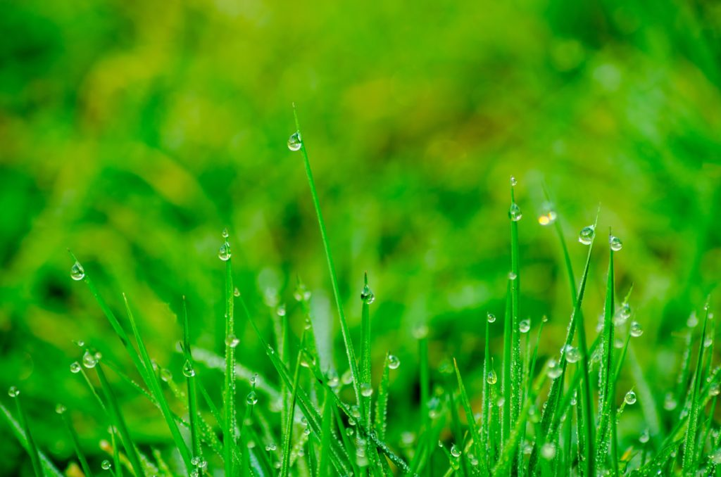 organic lawn care disadvantages