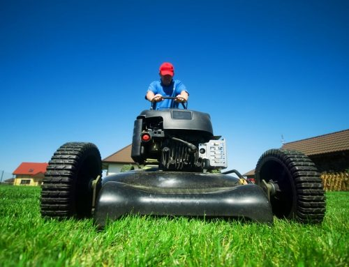 Spring Lawn Tips To Prepare Your Lawn For A Healthy Year