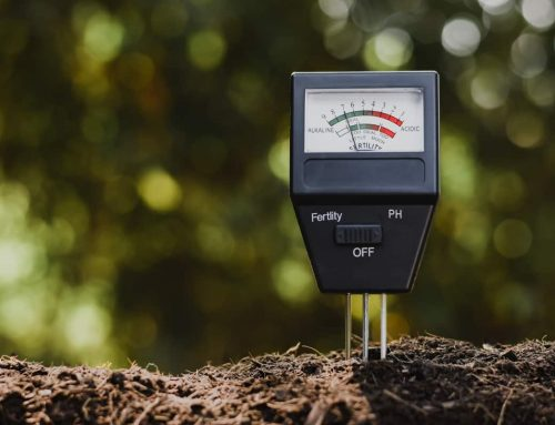 How to Test Your Soil PH and Why it is Important