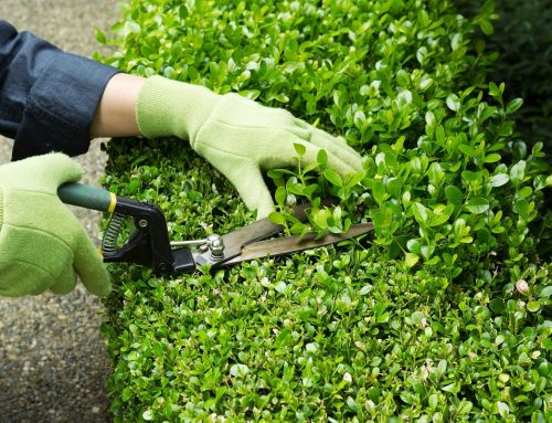 A Homeowner's Guide To Trimming Hedges And Shrubs